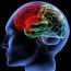 Neuromarketing: Qué Es, Técnicas, Ejemplos Y Empresas