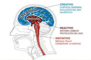 Tipos de cerebro y cerebro reptil en neuromarketing